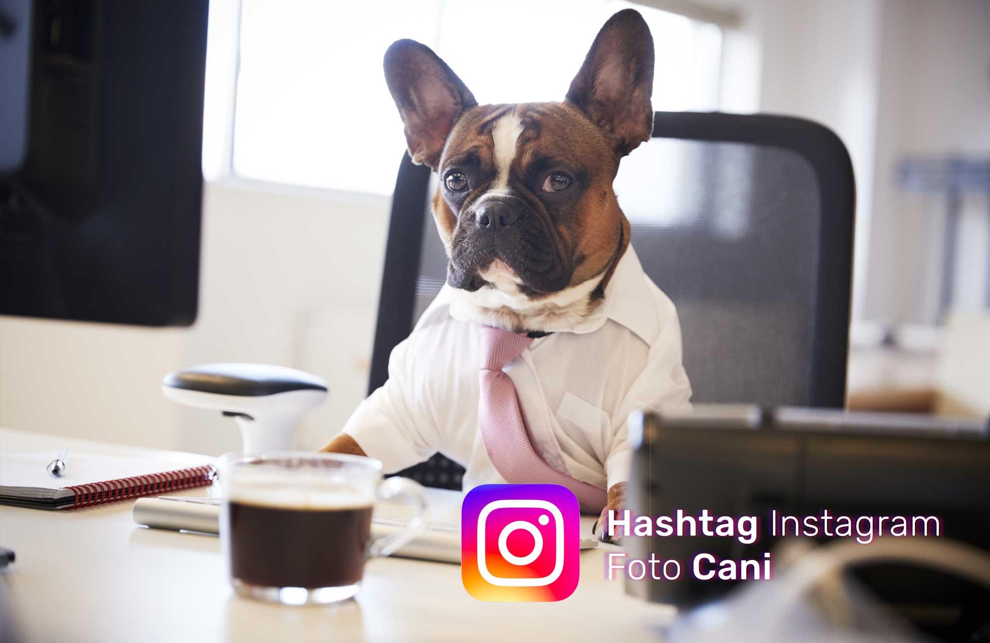Hashtag Instagram Cani | Quali Hashtag Usare Sulle Foto Del Cane?