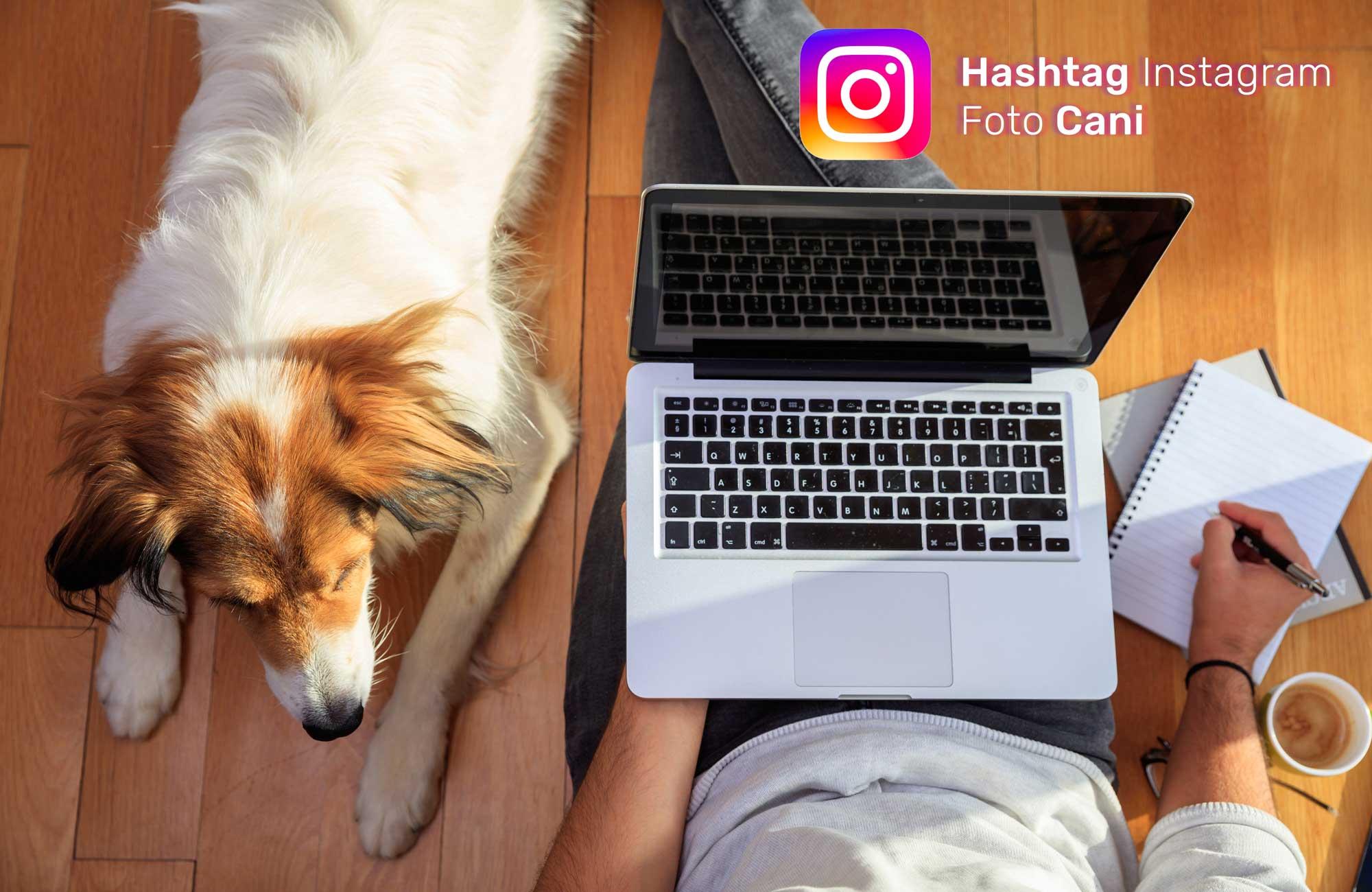 migliori-hashtag-foto-cane-Instagram