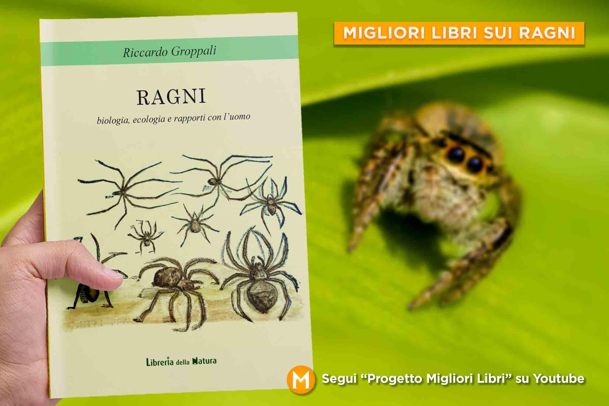 migliori-libri-sui-ragni